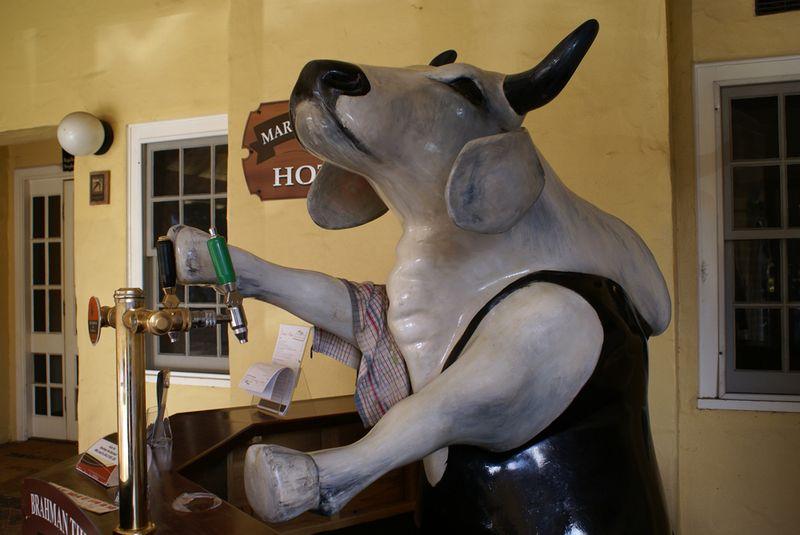 Brahman the barman