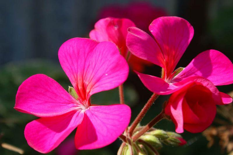 Flowerapril25th